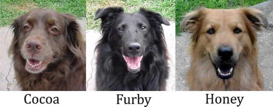 The Puppies. Cocoa, Furby, Honey