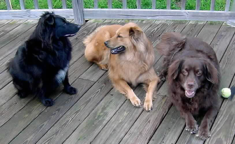 The Puppies. Furby, Honey, Cocoa