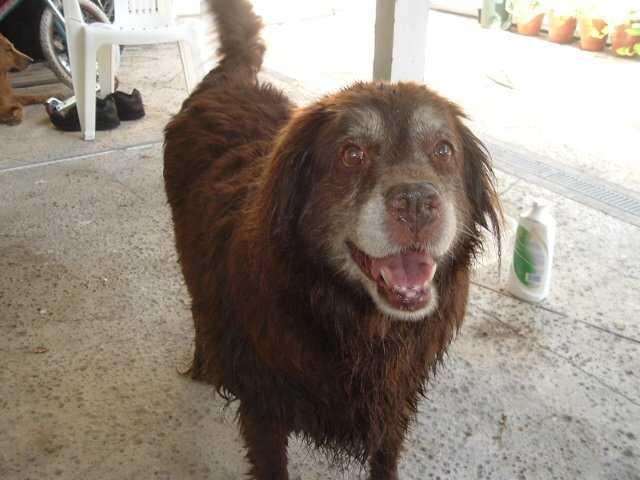 Cocoa fresh from the pool. 2010
